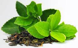 Tea aficionados welcome the new tea revolution