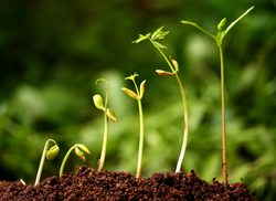 Permaculture - the evolution of organic